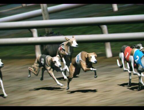 Bet on Virtual Greyhounds
